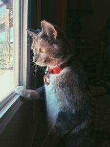 photo of my cat Freya